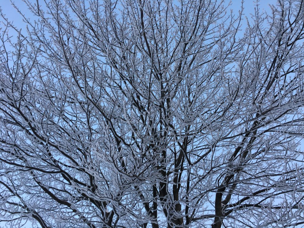 ice on trees
